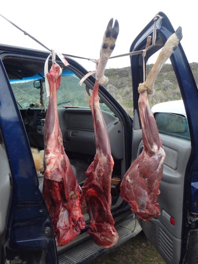 Salvaged meat from a roadkill deer.